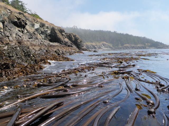 Bull Kelp Task Instructions here:
