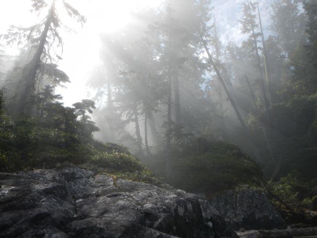 Foggy morning on Fire Island.