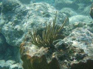 Snorkeling_4