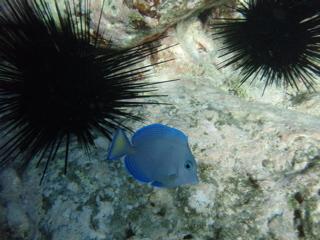 Snorkeling_5